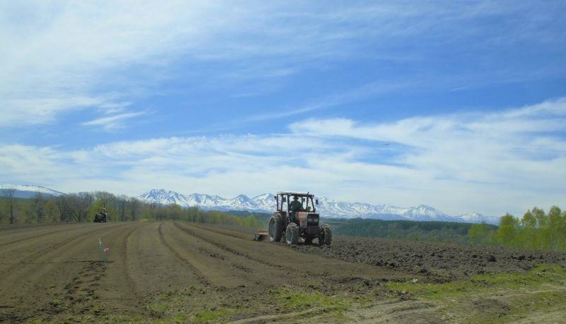 農産物情報 2020年5月20日