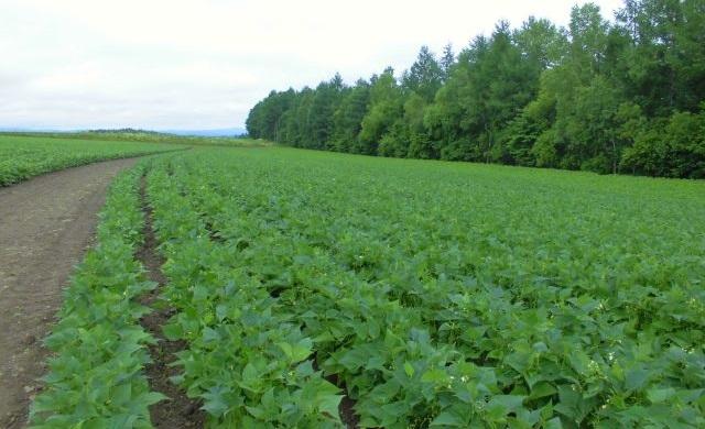 農産物情報 2020年7月24日