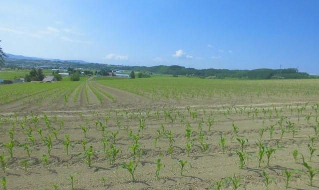 農産物情報 2021年6月17日